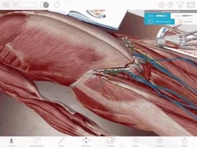 Apple AR: Human Anatomy Atlas Journeys to the Center of the Body with ARKit