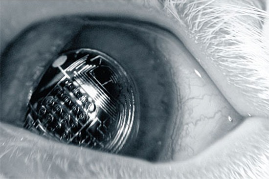 Augmented Reality Contact Lenses with Terminator Vision