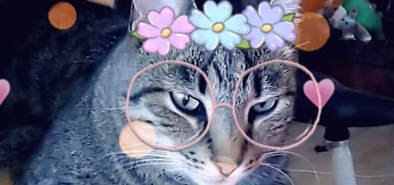 Snapchat Becomes SnapCAT with AR Lenses for Your Feline Friends