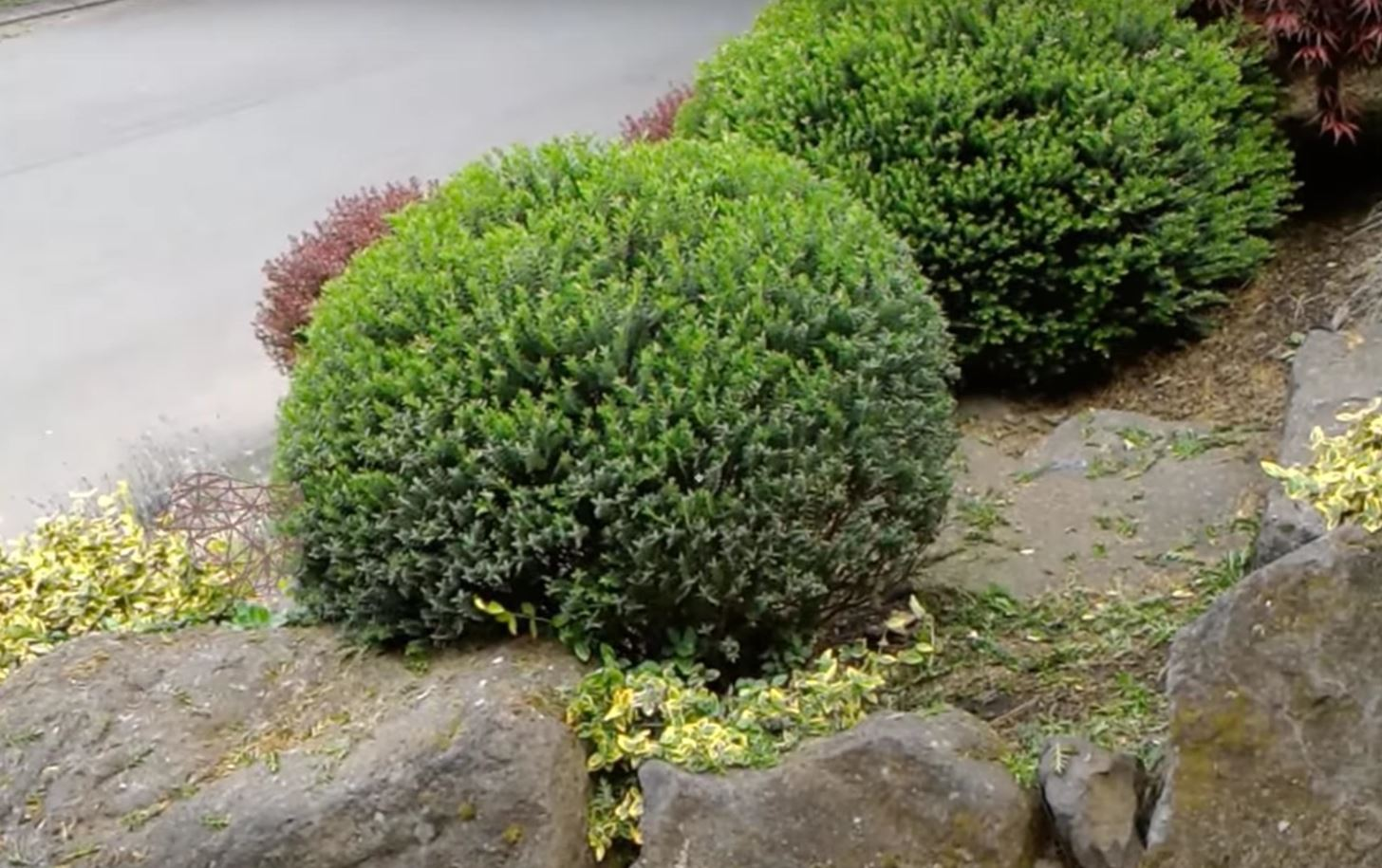 Javier Davalos Used the Microsoft HoloLens to Turn a Bush into a Perfect Sphere